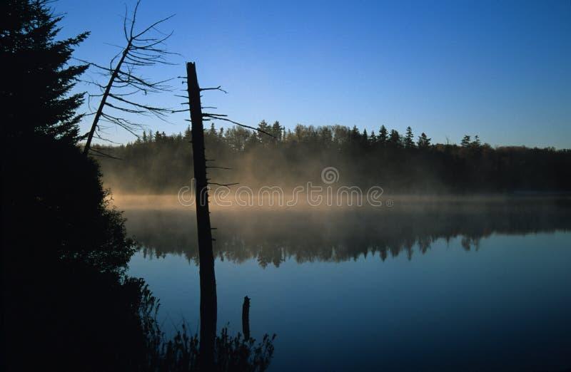 Mist Over Vijver Stock Afbeeldingen