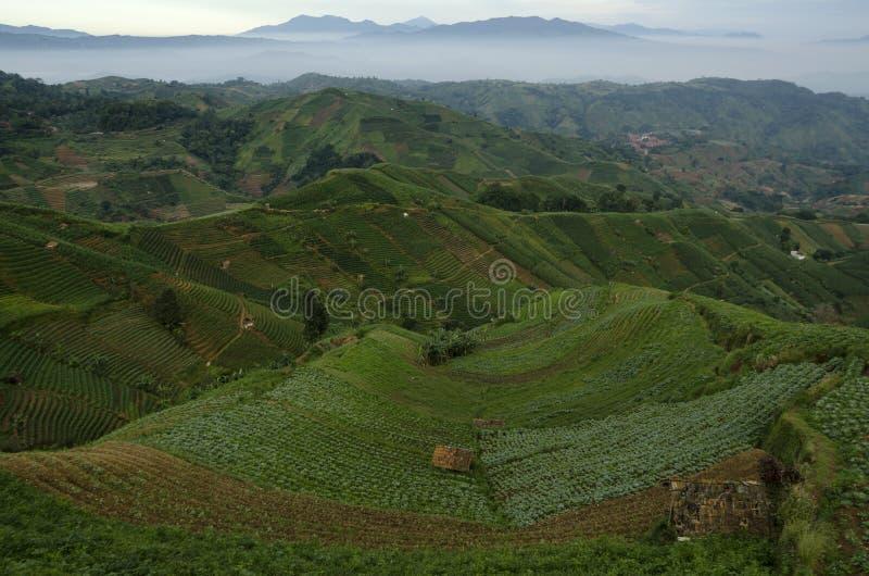 Mist at Panyaweuyan. Panyaweuyan Argapura, West Java - Indonesia royalty free stock photo