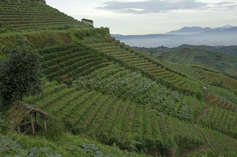 Mist at Panyaweuyan. Panyaweuyan Argapura, West Java - Indonesia royalty free stock images