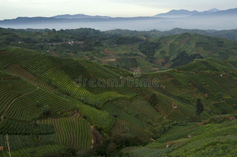 Mist at Panyaweuyan. Panyaweuyan Argapura, West Java - Indonesia royalty free stock photography