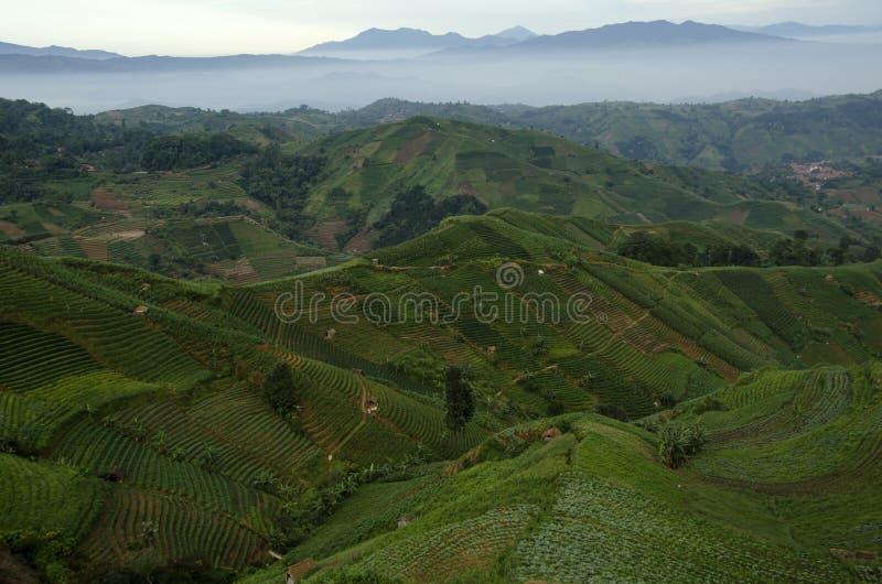 Mist at Panyaweuyan. Panyaweuyan Argapura, West Java - Indonesia royalty free stock photos