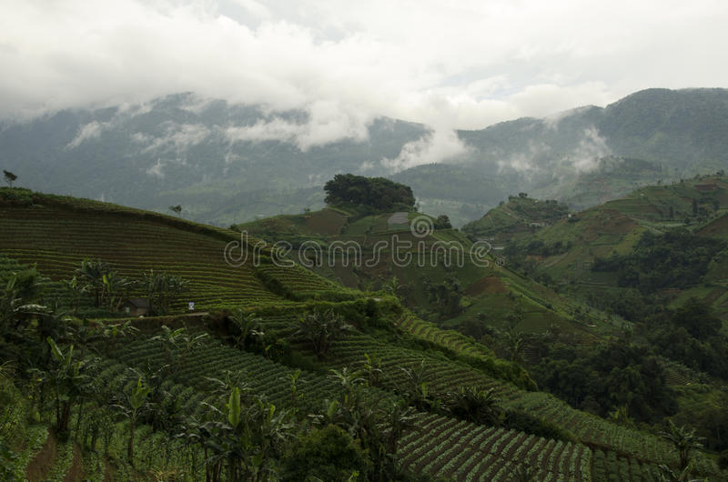 Mist at Panyaweuyan. Panyaweuyan Argapura, West Java - Indonesia royalty free stock image
