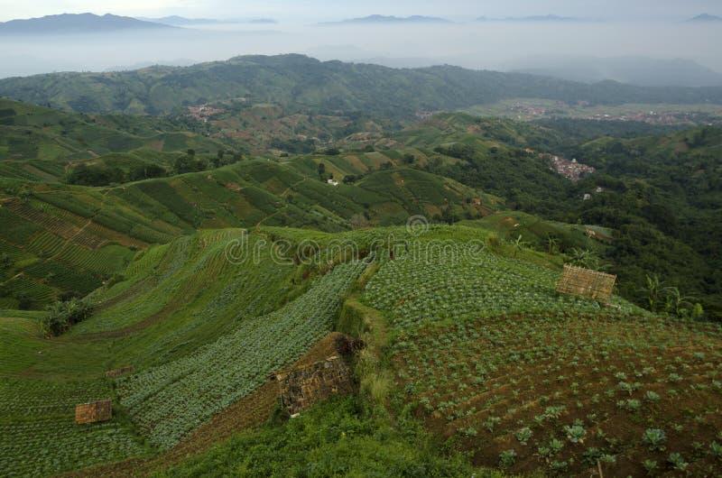 Mist at Panyaweuyan. Panyaweuyan Argapura, West Java - Indonesia stock photo