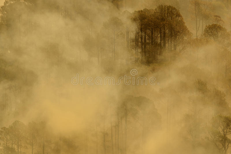 Download Mist stock image. Image of forest, pine, nature, amazing - 41857909