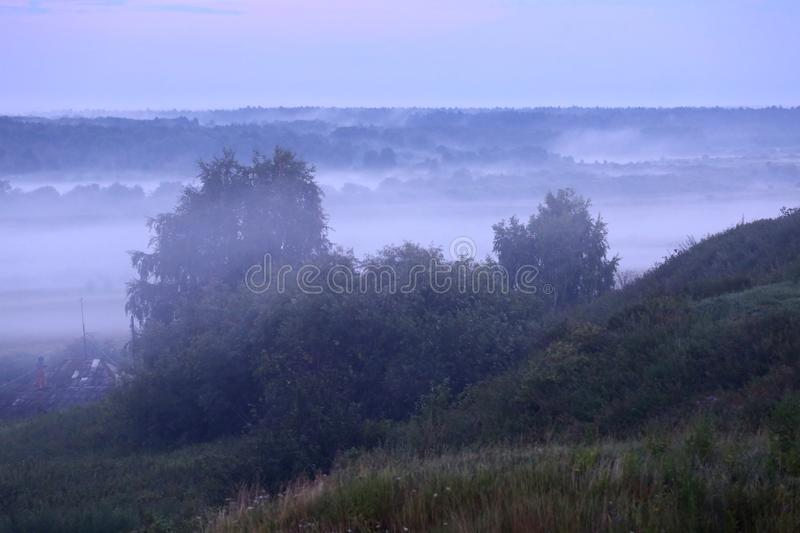 Mist after the rain. Misty forest after summer rain royalty free stock photography