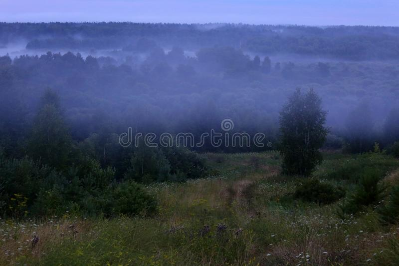 Mist after the rain. Misty forest after summer rain stock images