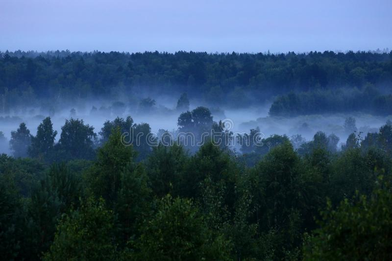 Mist after the rain. Misty forest after summer rain royalty free stock photos
