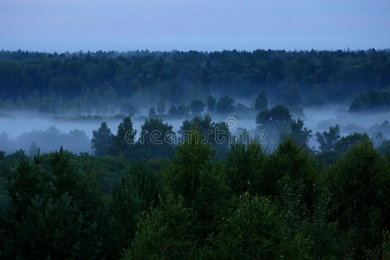 Mist after the rain. Misty forest after summer rain stock photography