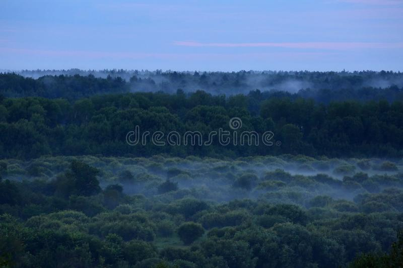 Mist after the rain. Misty forest after summer rain stock image