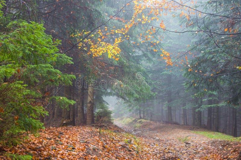 Mist in regenachtig bos royalty-vrije stock foto