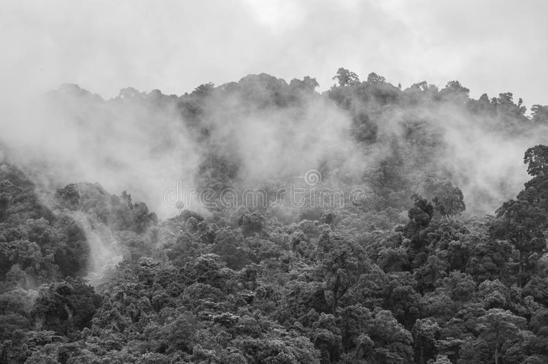 Mist rising from the jungle after a heavy rain black and white royalty free stock photography
