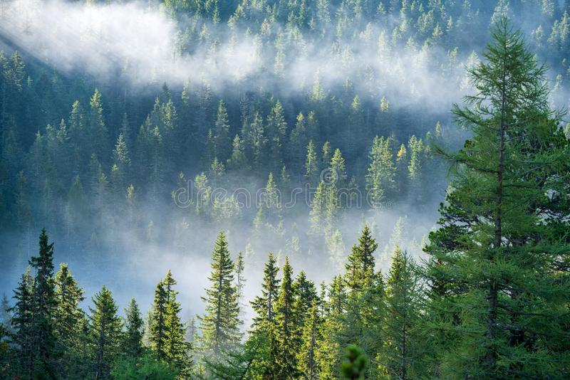 Mist rising from valleys in forest in slovakia Tatra mountains. Sunny day seen from above, walking above clouds stock photo