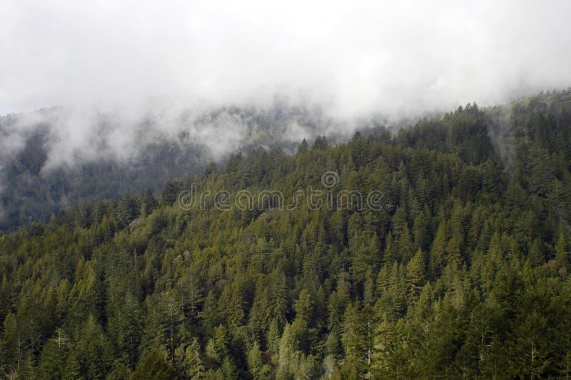 Mist shrouded forest stock photography