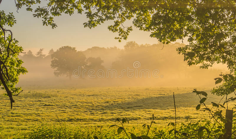 A serene Morning Mist lit by the rising sun Through The Sussex trees stock photo