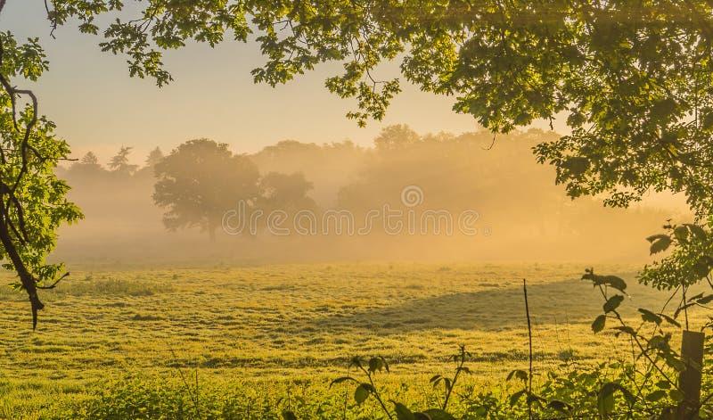 Mist till och med de Sussex träden arkivfoto