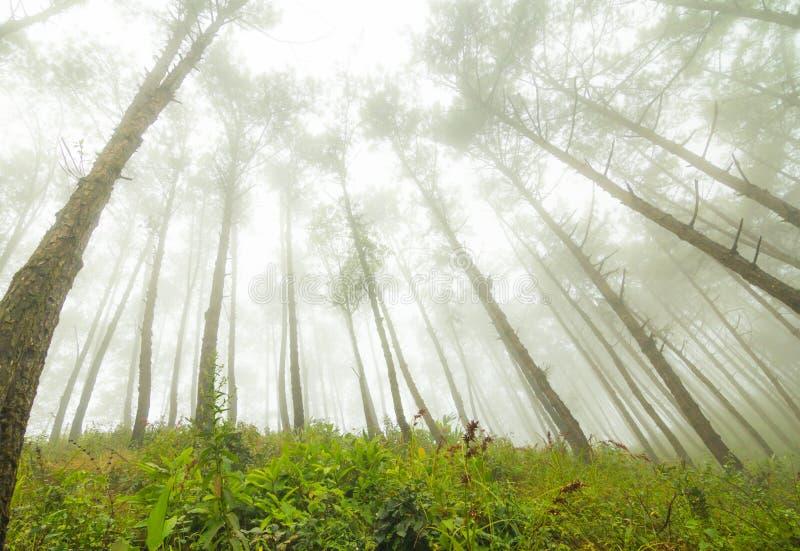 Fog and tree royalty free stock photos