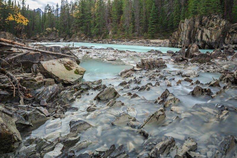 Mistaya kanjon, Alberta, Kanada royaltyfri foto