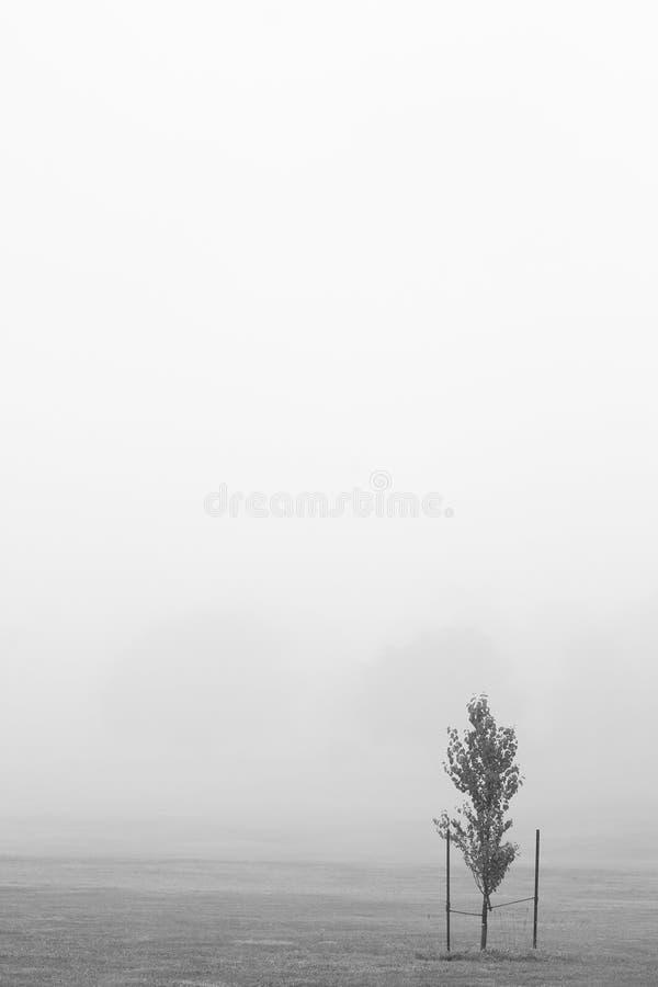 Mistboom stock afbeeldingen
