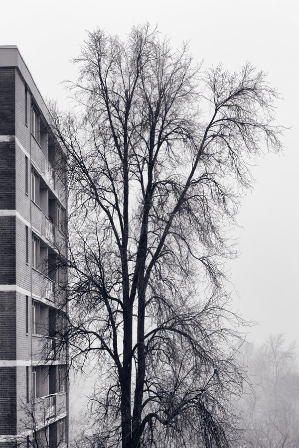 Mistboom en flatgebouw royalty-vrije stock foto's