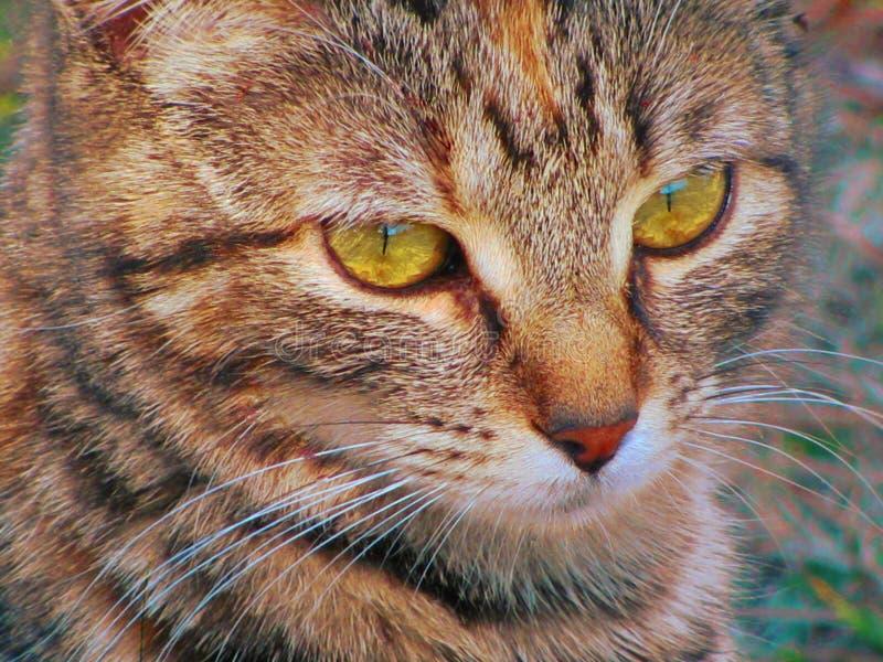 Misterio del gato fotos de archivo