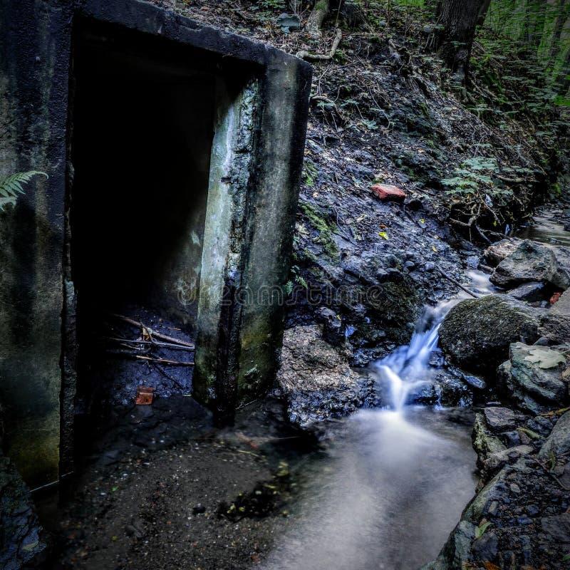 Misterio en el bosque fotos de archivo libres de regalías