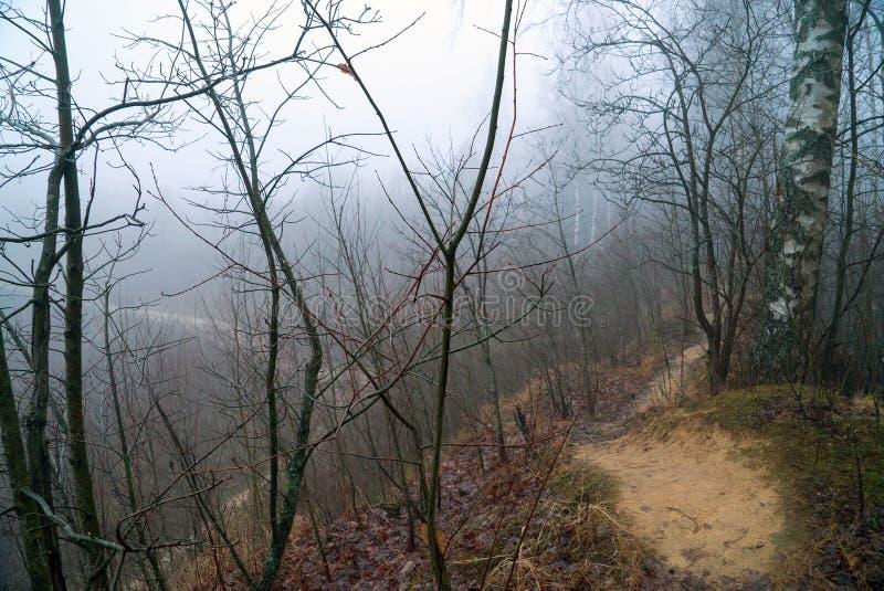 Misteriosa paisagem de dezembro misteriosa na floresta fotos de stock