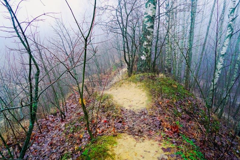 Misteriosa paisagem de dezembro misteriosa na floresta imagens de stock
