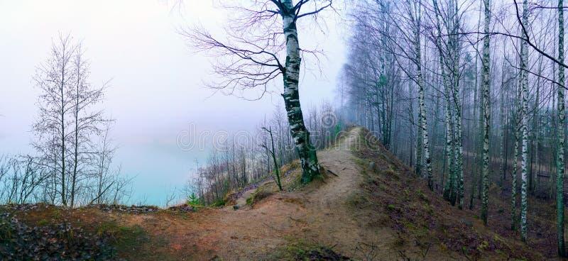 Misteriosa paisagem de dezembro misteriosa na floresta Região de Leningrado imagens de stock royalty free