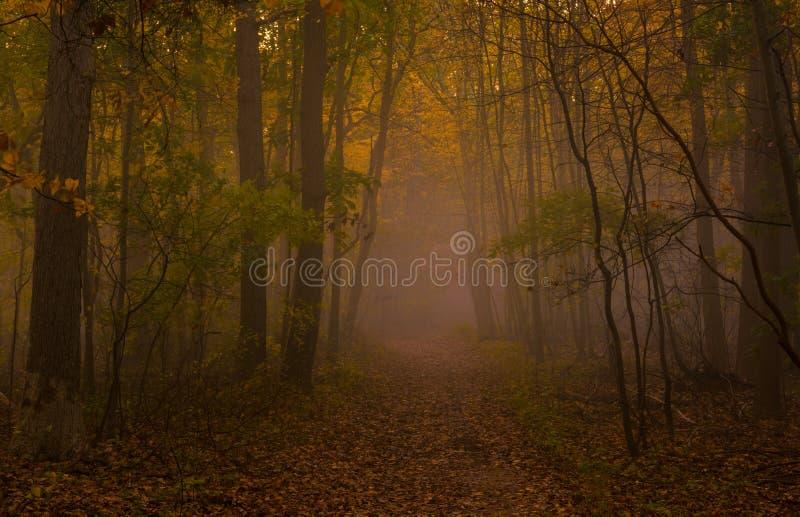 Mistero della nebbia di autunno fotografia stock libera da diritti