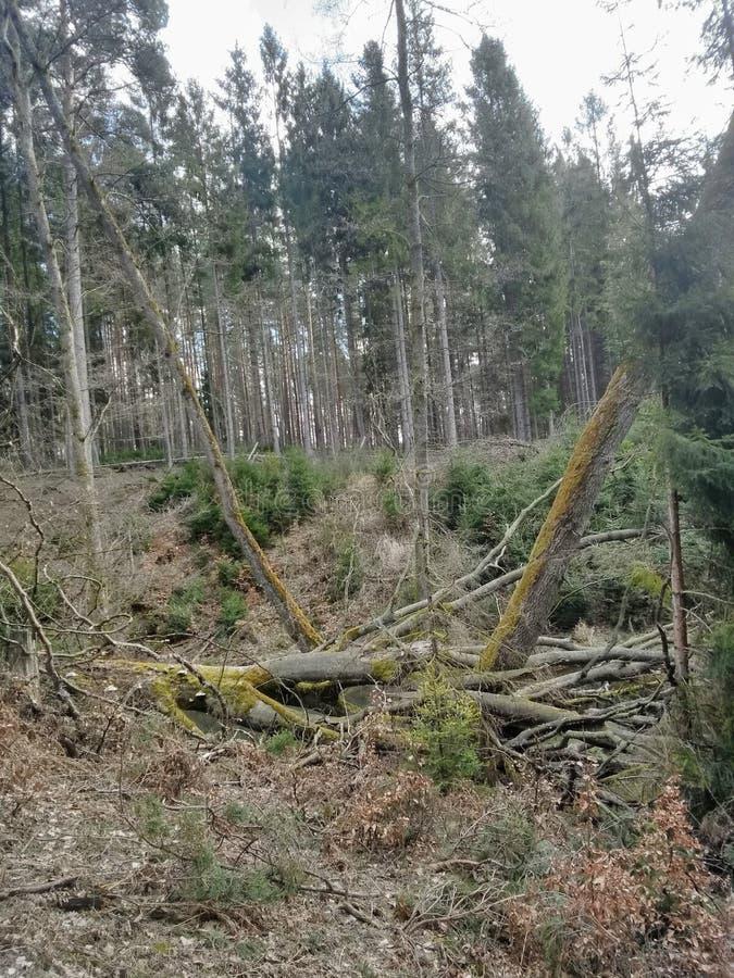 Mistic broken trees i royalty free stock photo