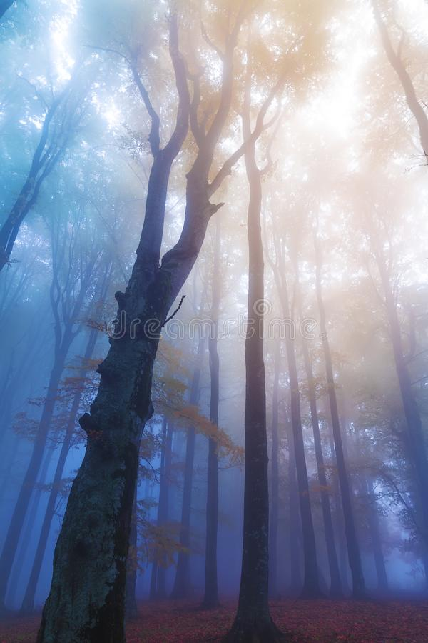 Mistic foggy forest . royalty free stock photography
