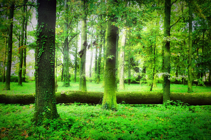 Mistical forest. In summer time stock photos
