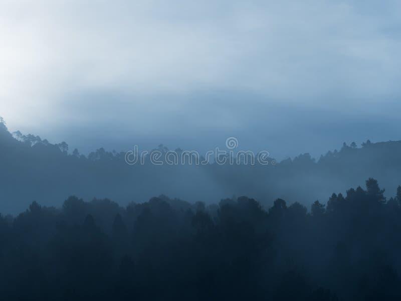 Mistig bos in de berg in de ochtend stock afbeeldingen