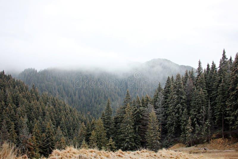 Mistig bos in de bergen royalty-vrije stock fotografie
