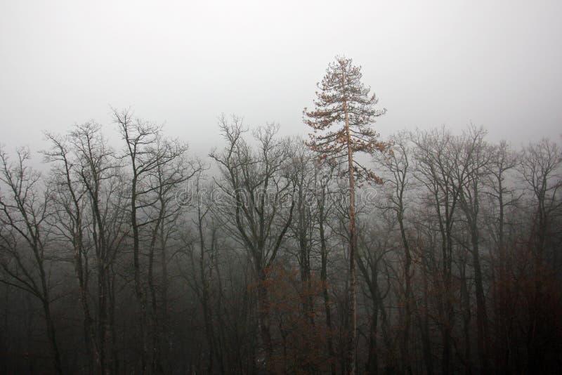 Mistig bos - depressie royalty-vrije stock afbeeldingen