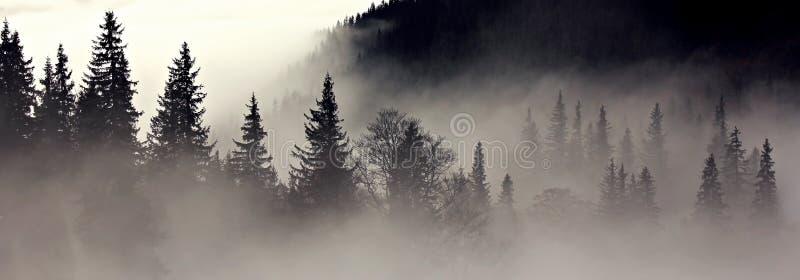 Mistig bos - depressie royalty-vrije stock afbeelding