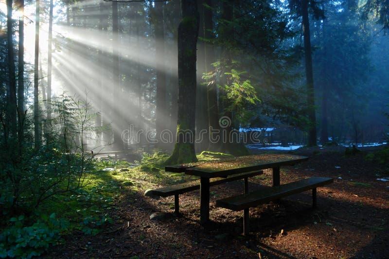 Mistig Bos met zonstraal, het Park van de Vallei Lynn royalty-vrije stock fotografie