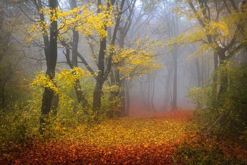 Mistig bos tijdens de herfst royalty-vrije stock afbeeldingen