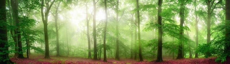 Mistig bospanorama met zachte stralen van licht royalty-vrije stock fotografie