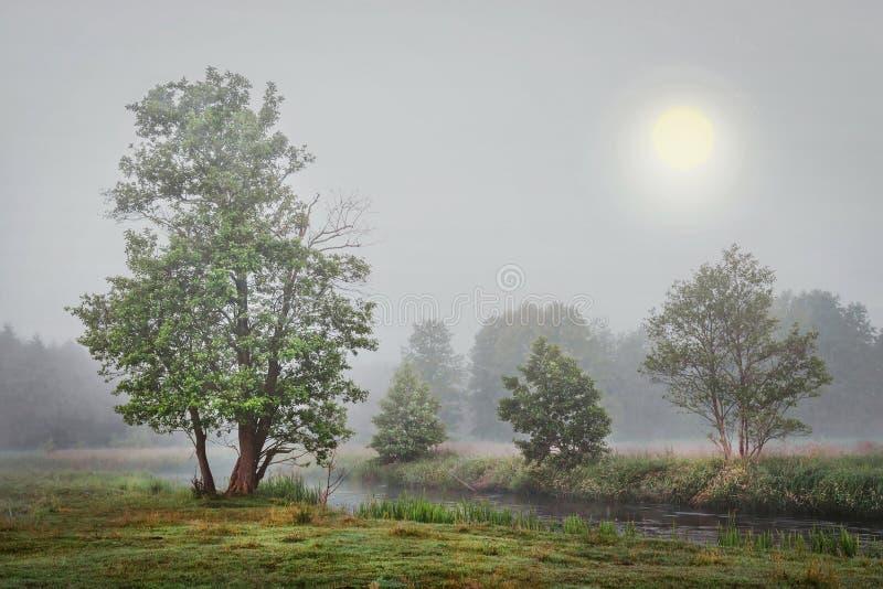 Mistig de herfstlandschap van bomen op rivierbank in grijze koude ochtend stock afbeelding