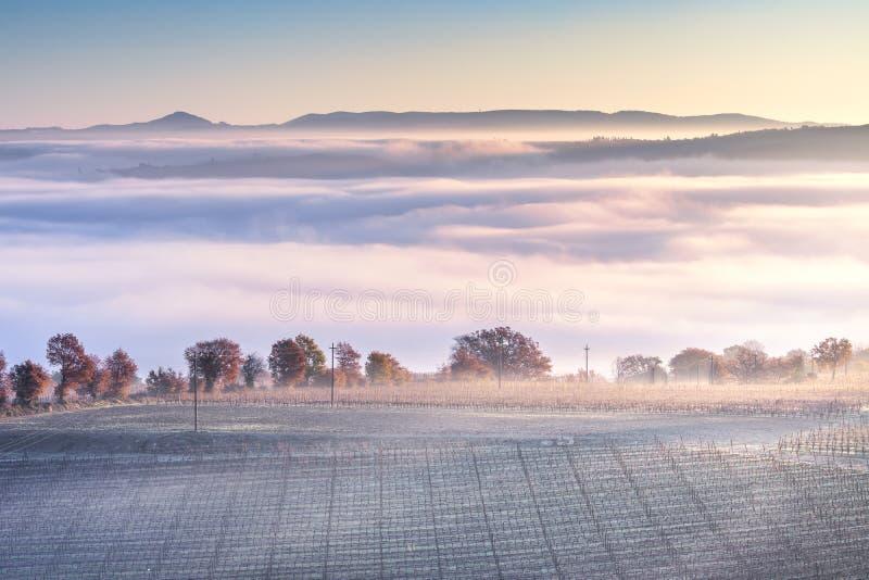 Mistig de winterpanorama van Toscanië, rollende heuvels en wijngaard Italië royalty-vrije stock foto's