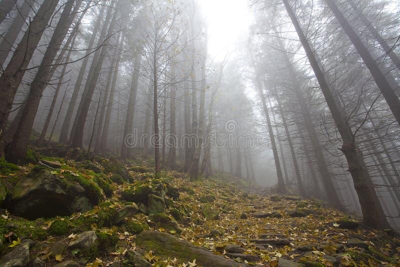 Mistig geheimzinnigheid bos met bomen in daling royalty-vrije stock afbeeldingen