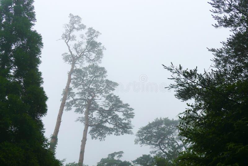 Mistig landschap met silhouetten van bomen op de stijging tot Ebino-kogenhooglanden, Kyushu, Japan stock fotografie