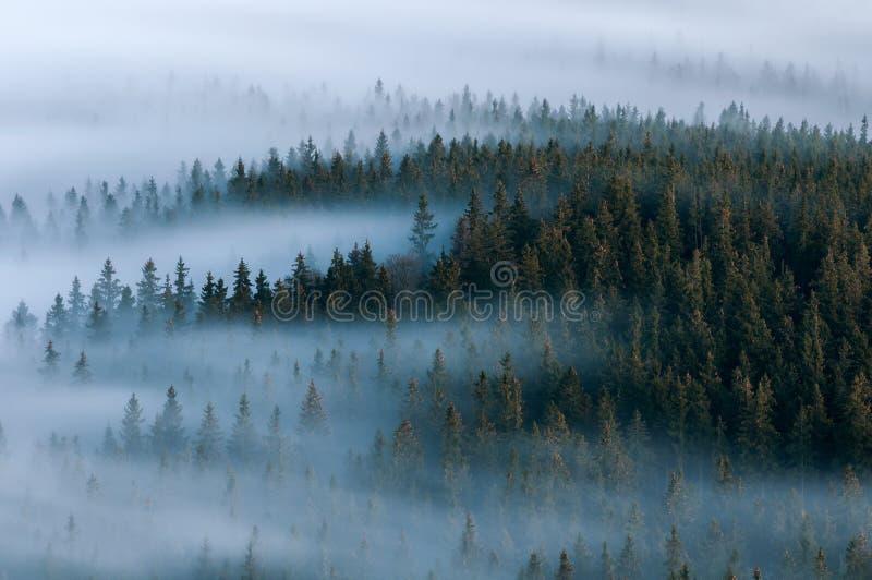 mistig landschap Mistige vallei van het nationale park van Sumava Detail van bos, Boubin-berg van Tsjechische Republiek royalty-vrije stock foto's