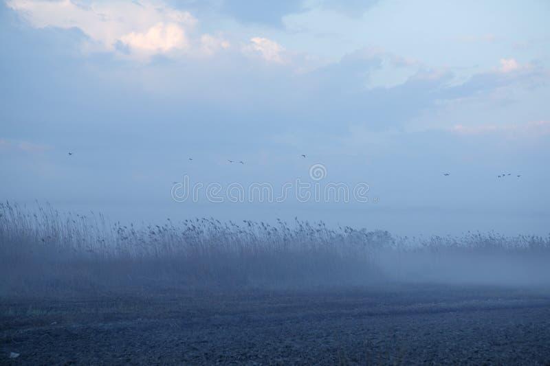 Mistig leg landschaps donkerblauwe grijs vast stock foto