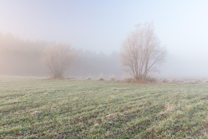 Mistig ochtendlandschap stock fotografie
