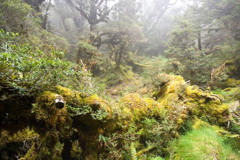 Mistig Regenwoud Stock Afbeelding