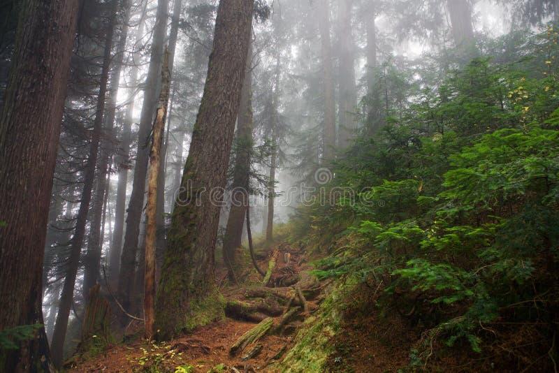 Mistig schot in het bos van Onderstel Seymour, Brits Colombia, Canada stock foto's