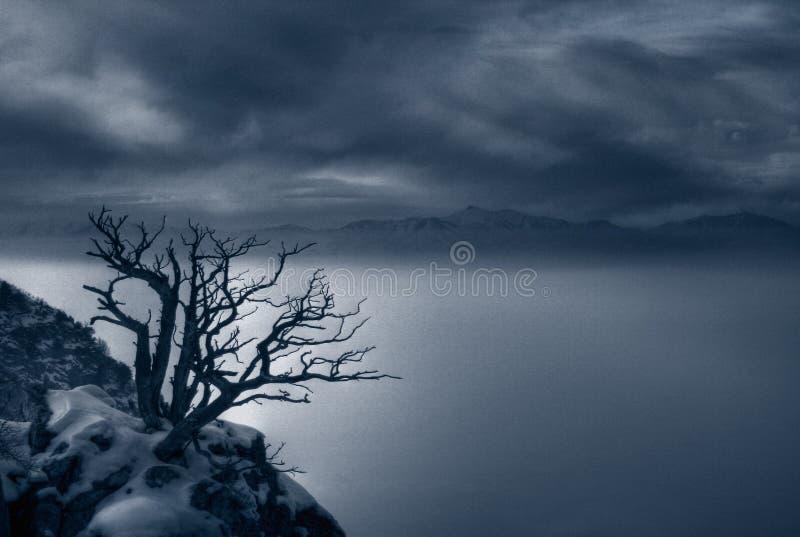 Mistige avond en griezelige boomduotone stock foto's