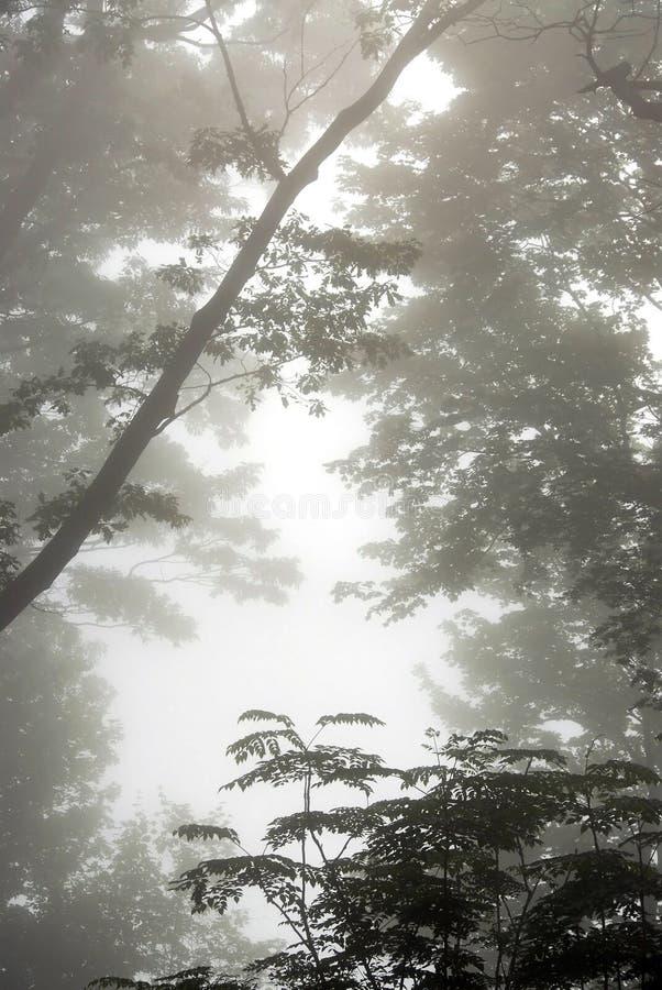 Mistige bomen royalty-vrije stock fotografie
